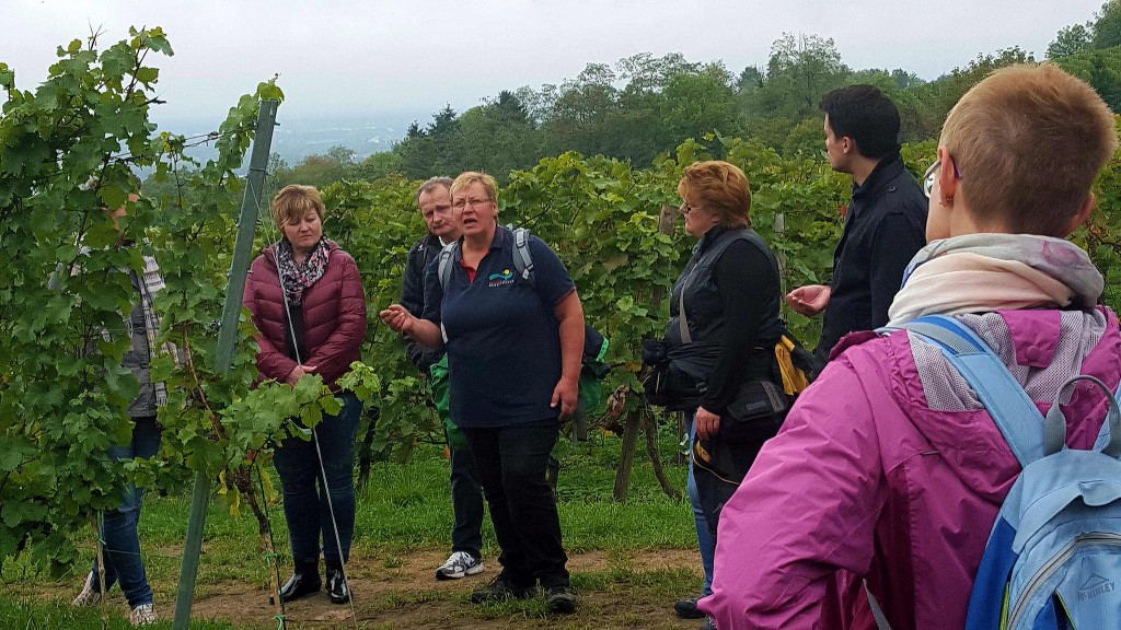 CG-Wein-Weinlagenwanderung-Weinprobe-Bensheim (13)