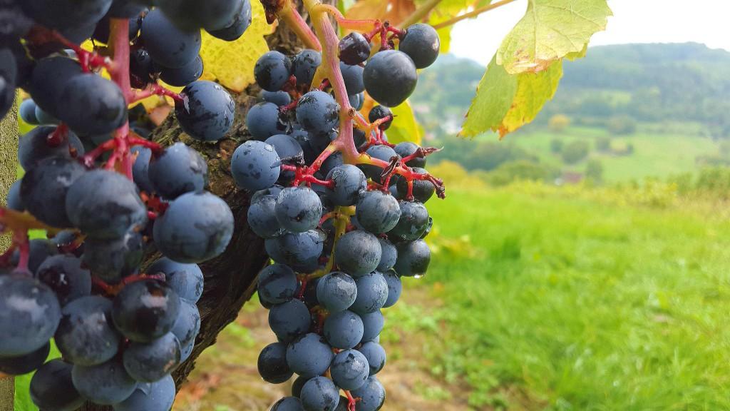 CG-Wein-Weinlagenwanderung-Weinprobe-Bensheim (15)