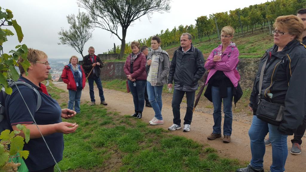 CG-Wein-Weinlagenwanderung-Weinprobe-Bensheim (20)