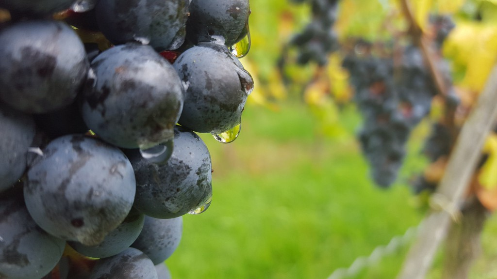 CG-Wein-Weinlagenwanderung-Weinprobe-Bensheim (3)