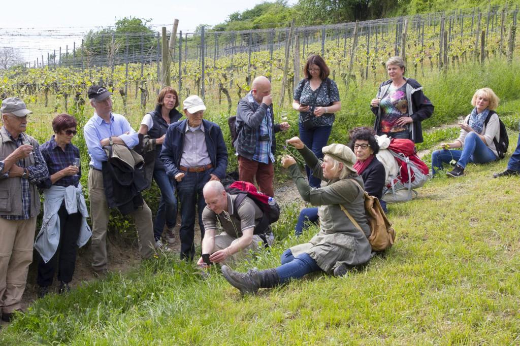CG Wein Weinprobe Kräuter und Wein-10