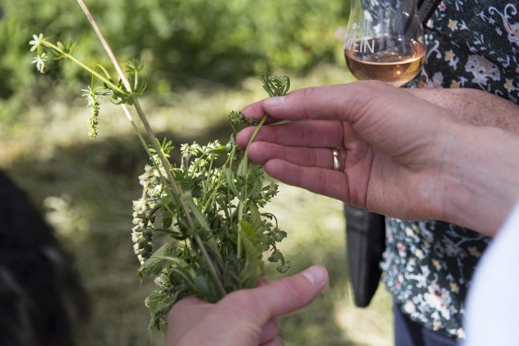 CG Wein Weinprobe Kräuter und Wein-22