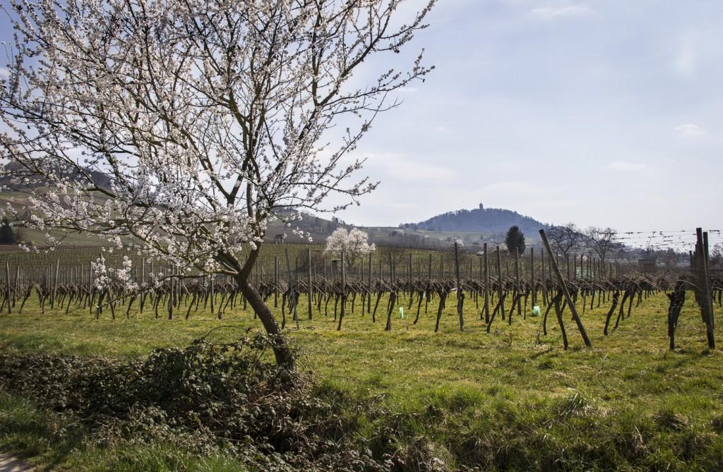 CG Wein Weinprobe mit Hüttenwanderung-8841