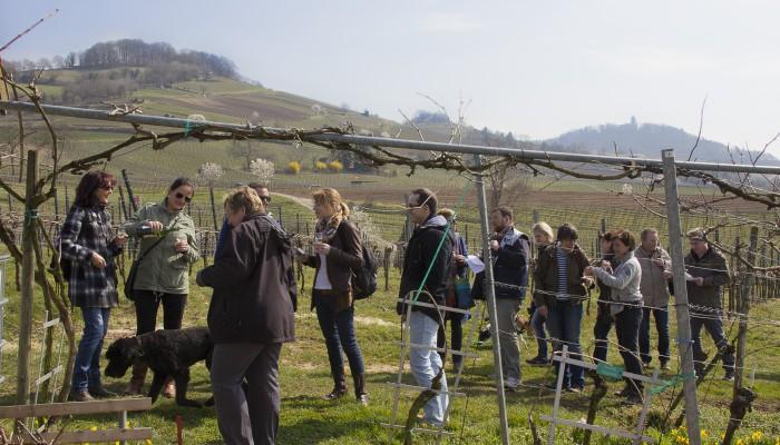 Weinprobe Lage Stemmler