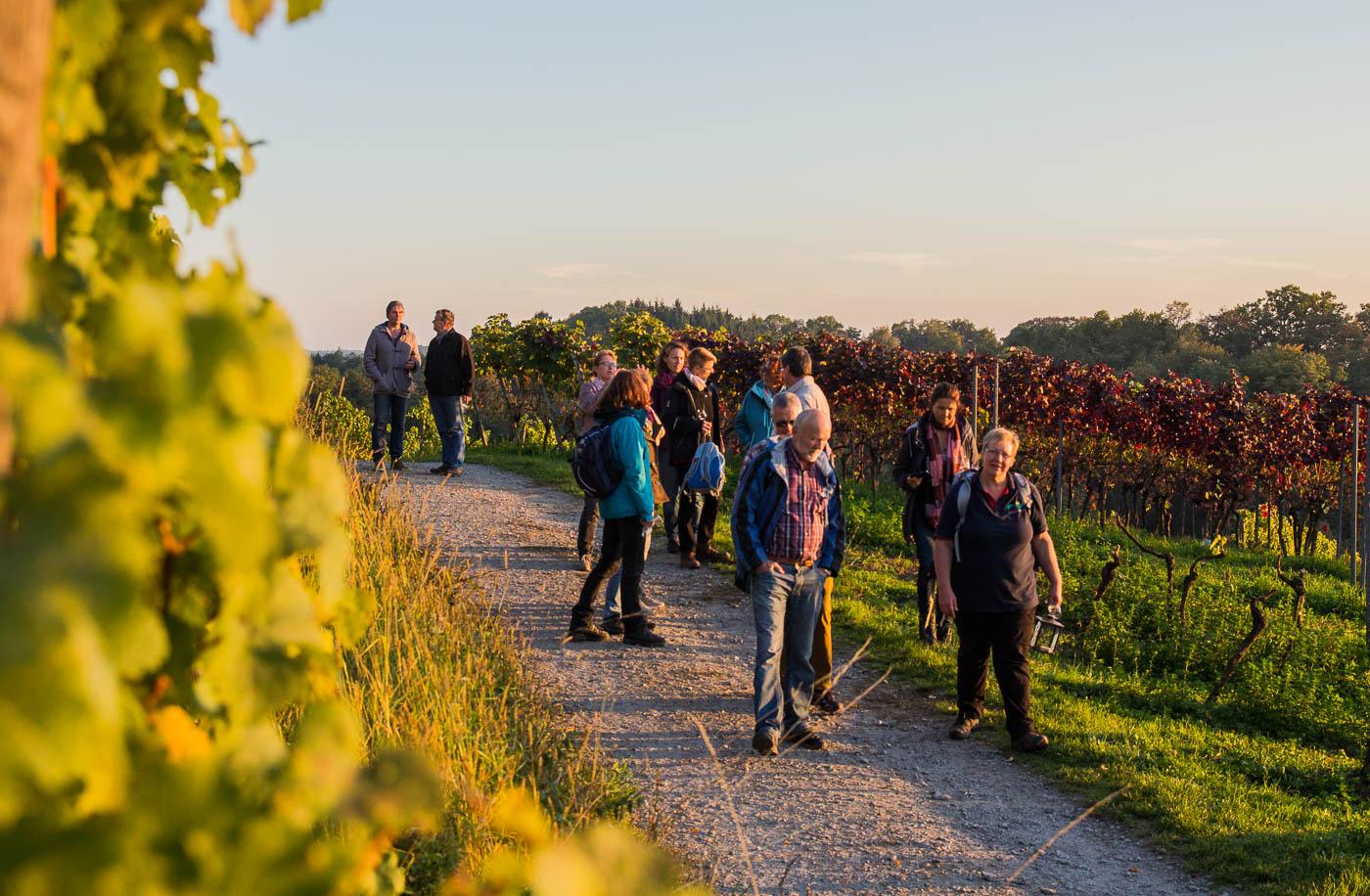 Weinprobe Hessische Bergstraße im Weinberg (16 von 24)