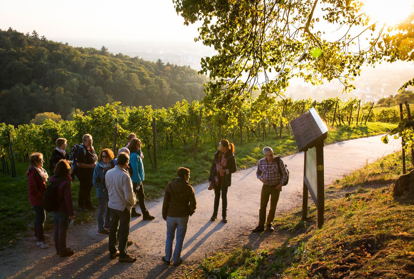 Weinprobe Hessische Bergstraße im Weinberg (15 von 24)