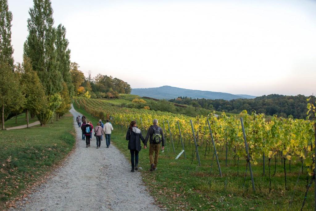 Weinprobe Hessische Bergstraße im Weinberg (21 von 24)