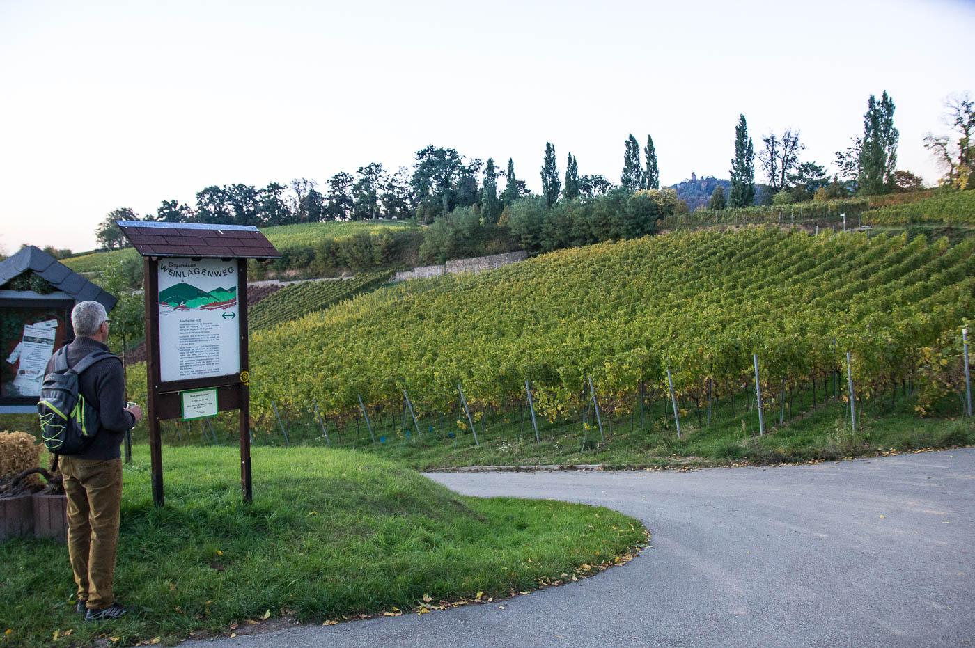 Weinprobe Hessische Bergstraße im Weinberg (22 von 24)